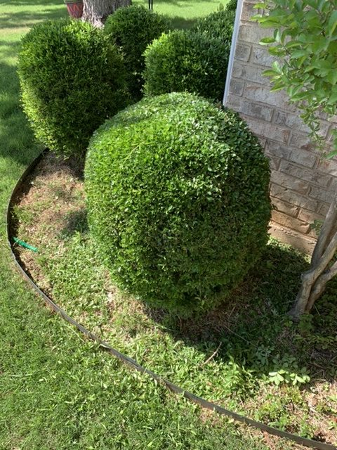 Hedge Trimming Hope Landscaping